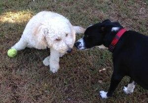 dog_friend2