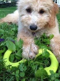 Love toys. Wanna play?